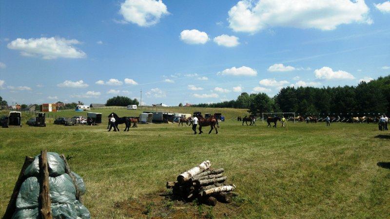 Pokazy koni na stadionie wBakałarzewie